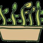 image for plant propagation module